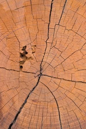 The face of a beautiful tree stump  photo