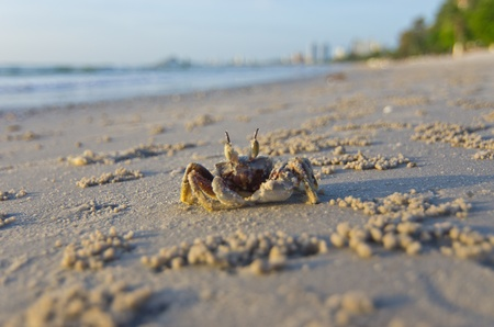 hermits: Crabs at the beach in the morning.
