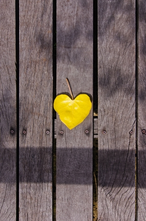 Yellow heart-shaped leaves that are placed on the boardwalks Stock Photo - 14846265