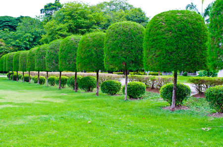 Ornamental gardens, palaces and old pine tree trim