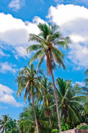 The Coconut beach on the beautiful sky. photo