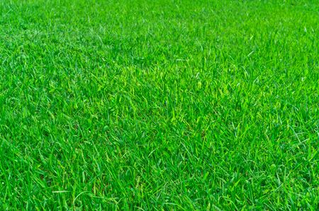 Background of green grass  In beautiful parks  photo