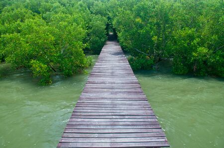 Wood bridge in mangrove forest  Explore nature  photo