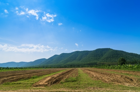 plot: Plot for growing vegetables on the farm. Stock Photo