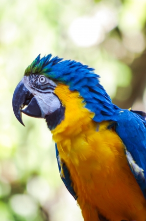 Macaw parrot on the face with bokeh background. Stock Photo - 17253861