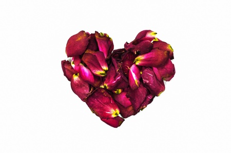 Heart made of red rose petals on a white background. photo