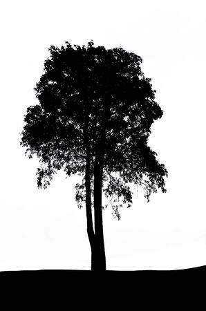 The tree silhouette isolated on white background  photo