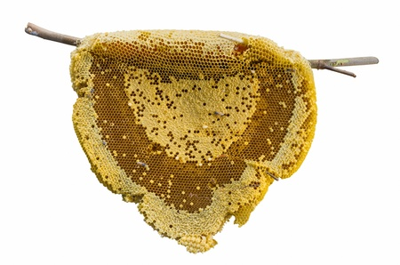 sweet honeycomb with honey, bee, isolated on white photo