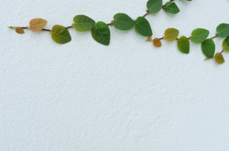 The ivy on the island along the walls white. For the background.