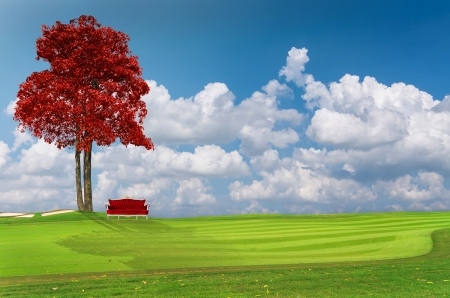 Shrubs tree with heart shaped leaves on the green grass with sky photo