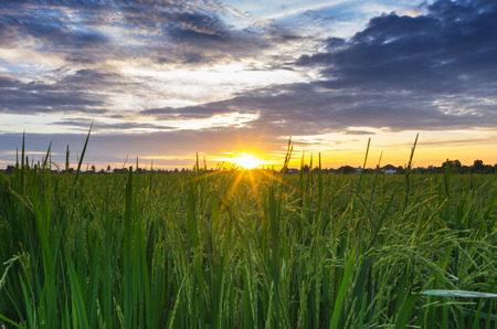 Sunset over the rice fields  Beautiful sky  photo