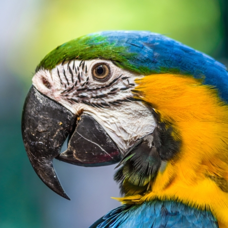 Macaw parrot on the face with bokeh background. photo