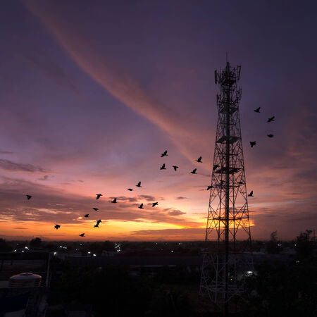 Silhouettes Telecommunication tower evening sky beautiful birds flying. Stock Photo