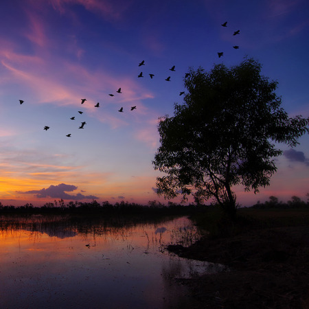 homing: Beautiful sunset over field. Birds are flying back the nest, Concept homing. Stock Photo
