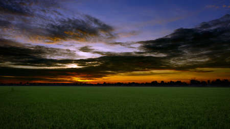 The beautiful sky sunrise Over the rice fields. photo