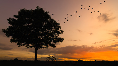 Silhouette tree and bike Sunset with birds was flying back to the nest