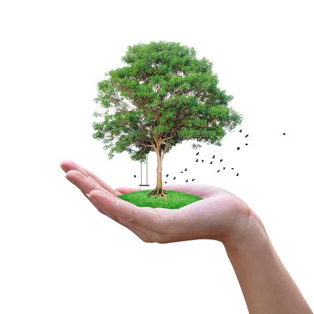 认为绿色生态概念,与手上的树。飞行的鸟隔绝在与裁减路线的白色背景。