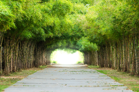 Walkway flanked on both sides with a bamboo forest. Stock Photo