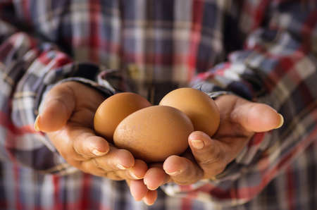 Fresh organic eggs on the hands of farmers.