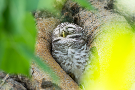 to get warm: Cute little owl in a tree hollow. We get warm from the sun, looked happy.