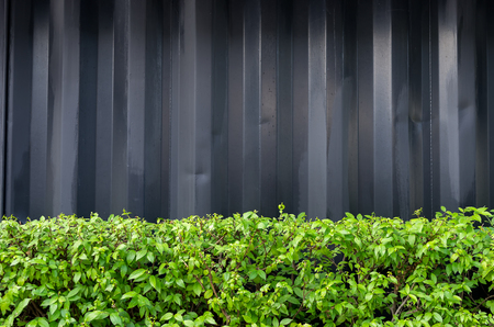 shrubbery: Black metal wall and exterior shrubbery