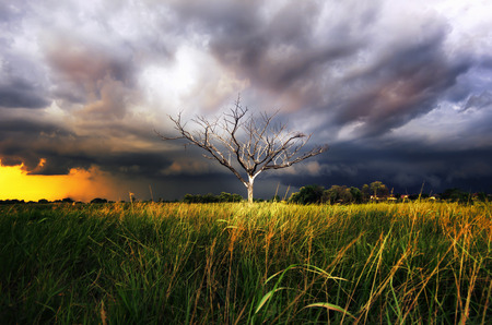 air dried: Storm clouds over the trees, dried in the open air. Stunning sky