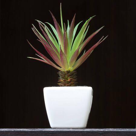 Aloe vera. In small white pots. Using the interior.