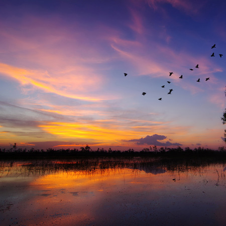 Beautiful sunset over field. Birds are flying back the nest, Concept homing. Stock Photo