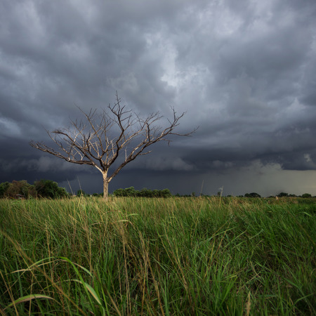 air dried: Storm clouds over the trees, dried in the open air.