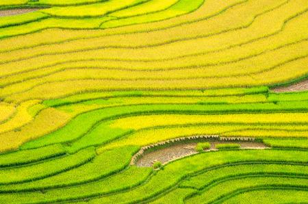 Rice fields on terraced of Mu Cang Chai, YenBai, Vietnam. Rice fields prepare the harvest at Northwest Vietnam. Stock Photo