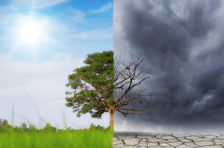 Landscape of Trees With the changing environment, Concept of climate change. Stock Photo