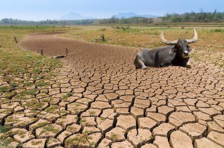 El calentamiento global, la sequía en el verano, el suelo es el depósito seco con el búfalo de Mae Moh, Lampang, Tailandia.