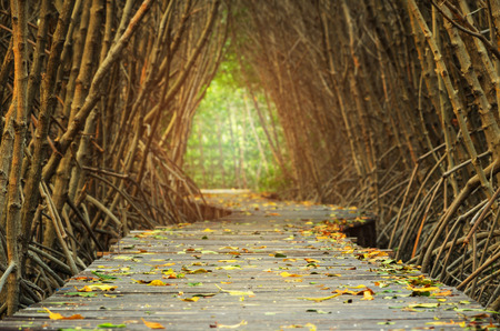 boardwalk trail: walkways in to mangrove forest Stock Photo