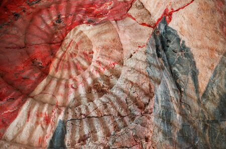 fossilized: Closeup of ammonite prehistoric fossil on the surface of the stone.