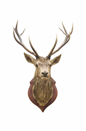 Stuffed deer head isolated on white with clipping path.