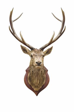 클리핑 패스와 함께 화이트 절연 박제 사슴 머리. 스톡 콘텐츠