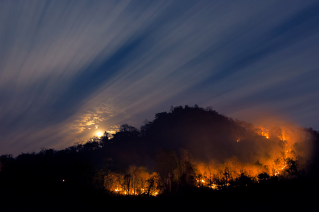 Forest fire, Wildfire burning tree on mountain with red and orange color at night in the forest at night, North Thailand. Archivio Fotografico - 100701205