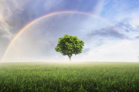 Arcobaleno dopo la pioggia, il cielo sopra il bellissimo prato verde, con albero solitario.