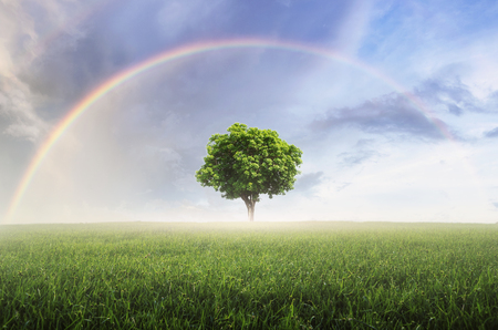 Rainbow after the rain, the skies over the beautiful green meadow, with lonely tree.