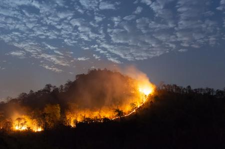 Feu de forêt, arbre brûlant Wildfire en couleur rouge et orange dans la nuit dans la forêt sur la montagne, au nord de la Thaïlande, flou. Banque d'images
