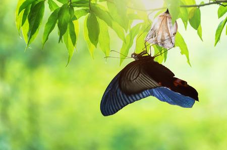 Geweldig moment over vlinderveranderingen van pop. Stockfoto