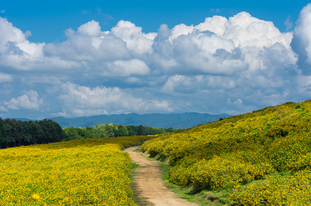 View of natural scenery Tung Bua Tong Mexican sunflower field in Mae Moh Coal Mine, Lampang Province, Thailand.