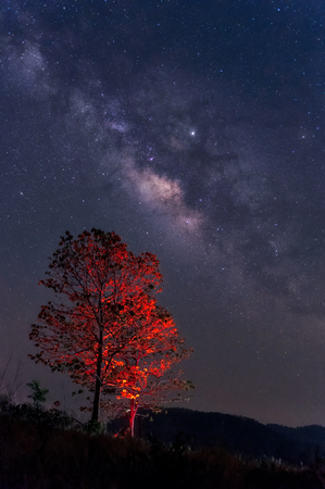Milky way galaxy with stars and space dust in the universe over red tree, long speed exposure.