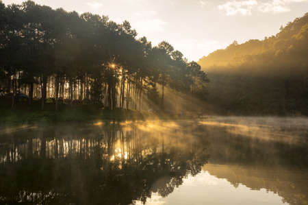 Camping and tent under the pine forest in sunset at Pang Oung (Pang Tong reservoir), Pang Oung lake with reflection of pine tree in a lake, Pang Oung Mae Hong Son province, North of thailand.