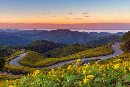 Beautiful Mexican Sunflower on Doi Mae U Ko Hill at Sunset in Winter, Mae Hong Son Province, Thailand. Stock Photo