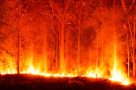 Wildfire, Forest Fire, Burning Trees in Red and Orange High Heat at Night in the Forest. On the mountains of northern Thailand, soft focus