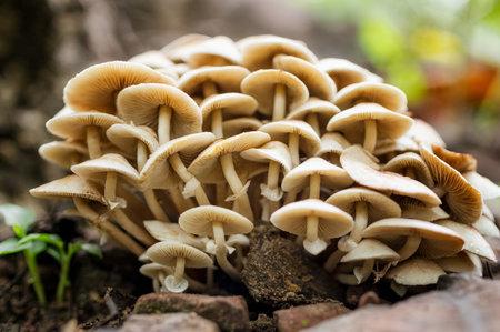 A lot Macro Wood mushrooms, mushroom with fungal growth. Tree full of mushrooms mushroom background.