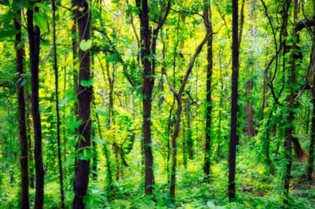 Blurred sunlight shines through the natural forests of the trees, vines that cover the ground and trees.