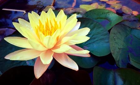 a flower: Flower