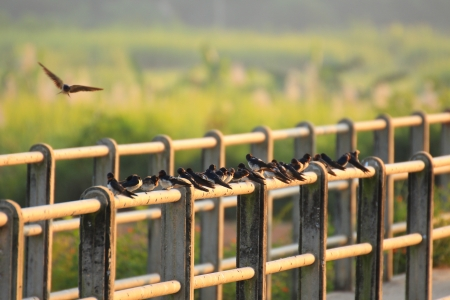 The Swallow  on the railing Stock Photo - 17128910